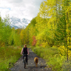 bicycler, dog in colored leaves